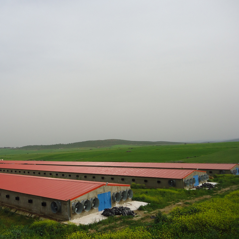 Chicken laying farm